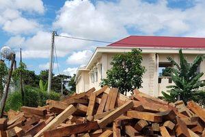 Vụ gỗ lậu tập kết ở huyện Mang Yang: Xác định được vị trí rừng bị phá