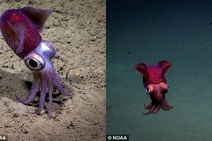 'Quái vật' lươn biển Gulper biến hình nhanh như chớp