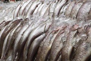 Bí quyết chọn cá tươi ngon, không sợ mua nhầm cá ươn