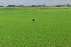 Hiệu quả từ tái cơ cấu nông nghiệp ở Đồng Tháp