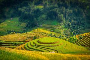 Chiêm ngưỡng vẻ đẹp Việt Nam mùa lúa chín