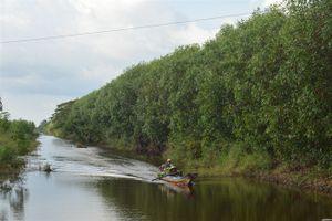 Kiên Giang: Gia tăng giá trị rừng trồng
