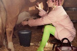 Người mẫu cưỡi heo, vắt sữa bò trong chiến dịch của Gucci