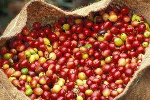 Giá nông sản hôm nay 25/9: Giá cà phê tăng vọt, thoát khỏi mốc đáy, giá tiêu đi ngang