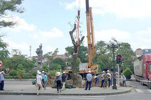 Hải Phòng: Trồng cây muồng ngủ khôi phục cảnh quan Quảng trường Tượng đài Nữ tướng Lê Chân