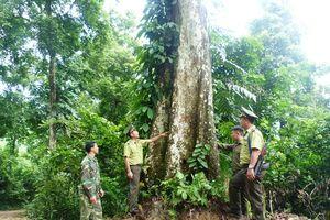 Tuyên Quang: Bài học kinh nghiệm về quản lý, bảo vệ rừng đặc dụng Na Hang