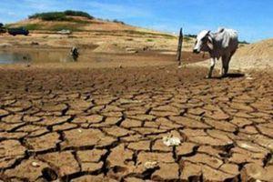 Việt Nam tổ chức Hội nghị Đối thoại cấp cao về biến đổi khí hậu