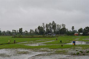 Kiên Giang: Gần 1.700ha lúa bị ảnh hưởng do ngập lũ