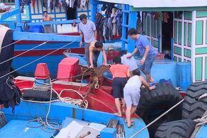 Tổ chức khai thác hải sản ở vùng biển một số nước có hợp tác