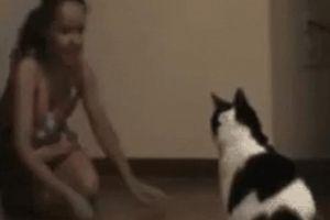 Con sen cười ngả nghiêng với các boss mèo lầy lội