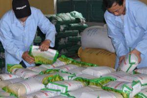 Trồng theo hướng hữu cơ, gạo sạch Phong Thử được ưa chuộng