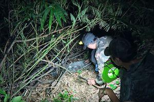 Mùa lũ ở An Giang: Ớn lạnh đêm đi săn rắn nước tràn đồng