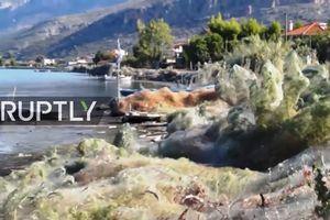 Hàng nghìn con nhện xâm chiếm thị trấn Hy Lạp