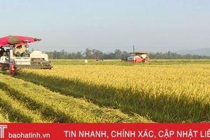 Phá bờ thửa, nông dân Cẩm Xuyên '4 cùng' trên cánh đồng lớn