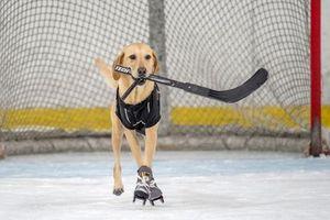Clip: Chú chó có khả năng trượt băng có một không hai