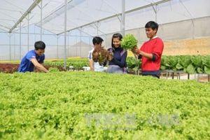 Phát triển nông nghiệp thông minh – Bài 1: Thời nhà nông đầu tư 'công nghệ cao'