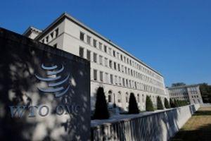 WTO hạ mức dự đoán tăng trưởng thương mại toàn cầu