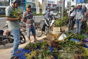 Thăm chợ lan rừng bán theo kg ở Đà Nẵng