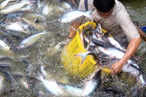 ADB nhận định về kinh tế Việt Nam: Ðối mặt 5 điểm nghẽn