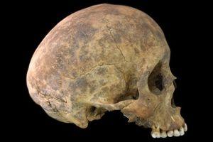 'Bật mí' bí mật ngôi mộ cổ với các bộ xương cắt rời