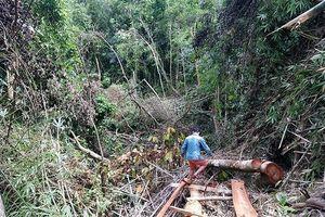 Vụ rừng A Lưới bị rút ruột: Yêu cầu điều tra, xử lý làm rõ trách nhiệm