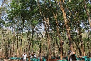 Đắk Lắk: Áp dụng nhiều giải pháp nâng cao năng suất chất lượng mật ong