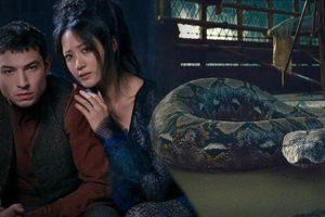 J.K Rowling lần đầu lý giải nguồn gốc của con rắn Nagini trong 'Harry Potter'