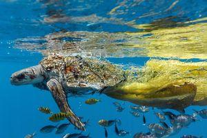 Chùm ảnh 'tố' con người đã hủy hoại môi trường như thế nào