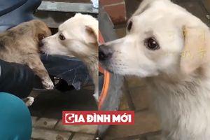 Rơi nước mắt cảnh chó mẹ quyến luyến không nỡ rời xa khi con về nhà chủ mới