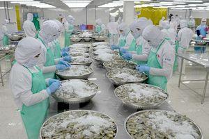 Cơ hội lớn cho việc xuất khẩu tôm của Việt Nam