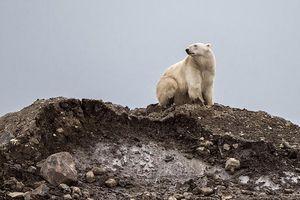 Những bức ảnh ấn tượng nói thay lời kêu cứu của môi trường