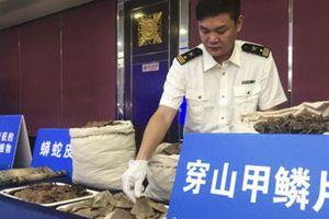 Bắt 4 nghi phạm buôn lậu hơn 7 tấn vảy tê tê từ châu Phi vào Trung Quốc