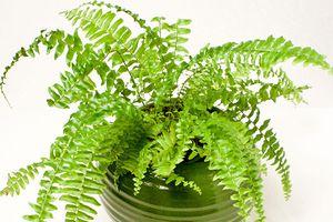 Những loại cây các nhà khoa học Mỹ khuyên nên trồng trong nhà để thanh lọc không khí