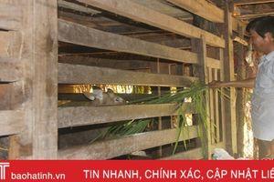 Xã nuôi hươu nhiều ở Hương Sơn đạt tổng đàn gần 3.000 con