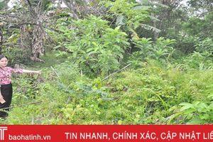 Xử lý tồn lưu thuốc BVTV ở Hà Tĩnh: Khó do thiếu kinh phí, công nghệ