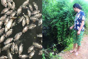 Hà Tĩnh: Cá chết trắng kênh nghi do nước thải rò rỉ từ bãi rác