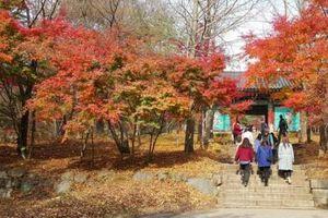 Du lịch mùa thu: Những hành trình mang đến sự an nhiên cho tâm hồn