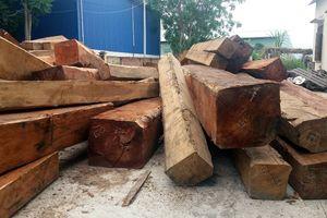 Vẫn còn nhiều vấn đề trong công tác bảo vệ rừng ở Gia Lai 