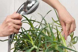 Những loại cây xanh nên trồng trong nhà tắm