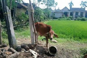 Xử lý cán bộ khuyến nông xã nhận tiền 'bôi trơn' của các hộ chăn nuôi