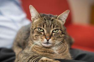 Loài mèo ngày nay bắt chuột rất kém, thậm chí... sống chung với chuột
