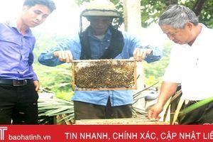 Thu trên 50 tấn mật, người nuôi ong Vũ Quang thắng lớn