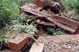 Khởi tố 2 cán bộ bảo vệ rừng và 1 giám đốc doanh nghiệp liên quan các vụ phá rừng