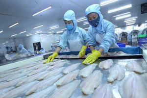 Cá da trơn rộng đường vào thị trường Mỹ