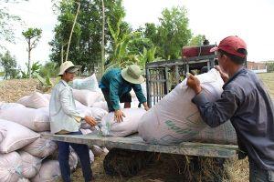 Xuất khẩu gạo Việt Nam đạt mức cao nhất 3 năm qua