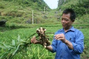 Phát triển nông nghiệp hữu cơ gắn với thị trường tiêu thụ