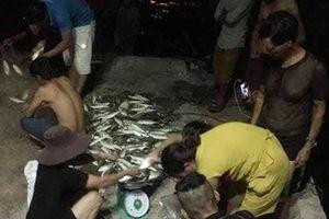 Quảng Nam: Ngư dân Cù Lao Chàm trúng đậm cá bạc má