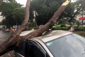 Cây xanh đè trúng ôtô ở Sài Gòn, nhiều người tháo chạy