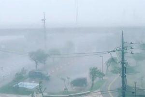 Bão Trà Mi tấn công Nhật Bản: Gió mạnh kỷ lục, trên 100 người thương vong
