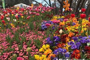 1 triệu loài hoa khoe sắc ở Lễ hội hoa xuân Floriade 2018